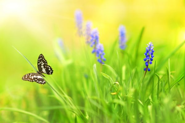 butterfly and purple flowers in a field of tall green grass